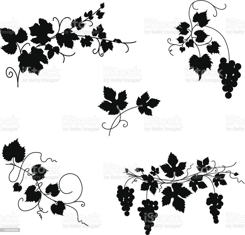 Grapevine Design Ornaments vector art illustration