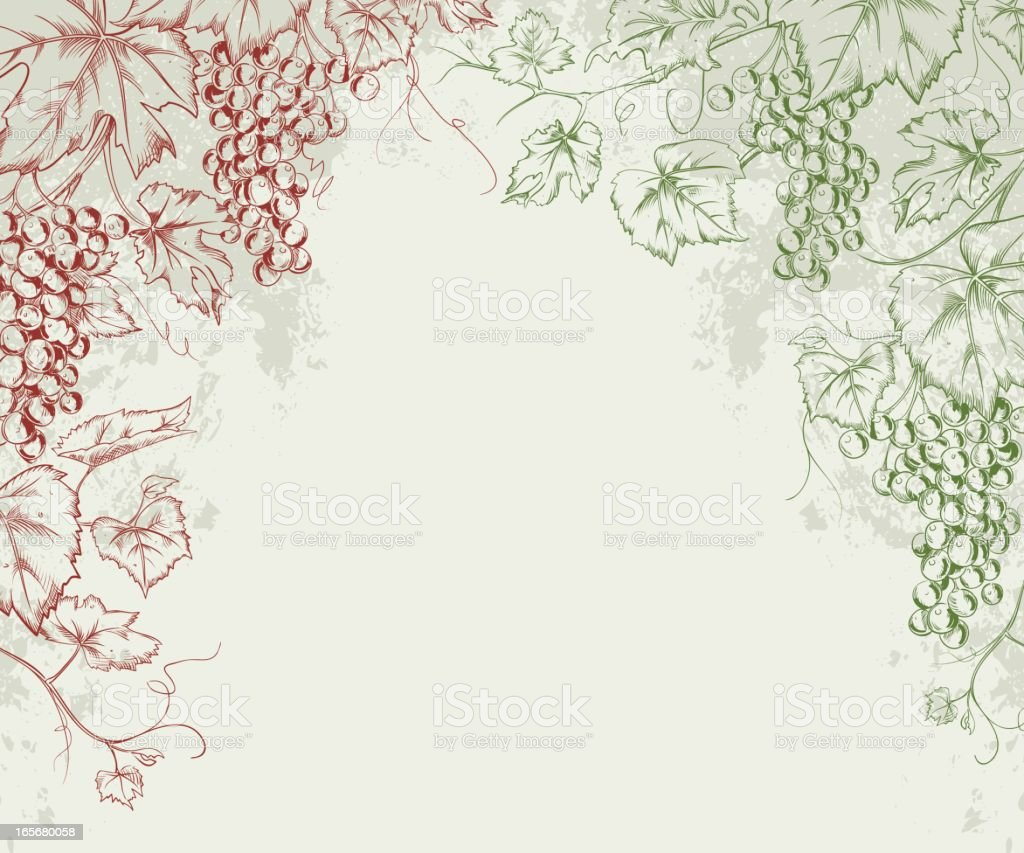 Grapevine Line Art Frame vector art illustration
