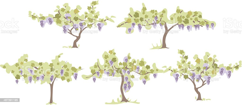 Grapevines royalty-free stock vector art