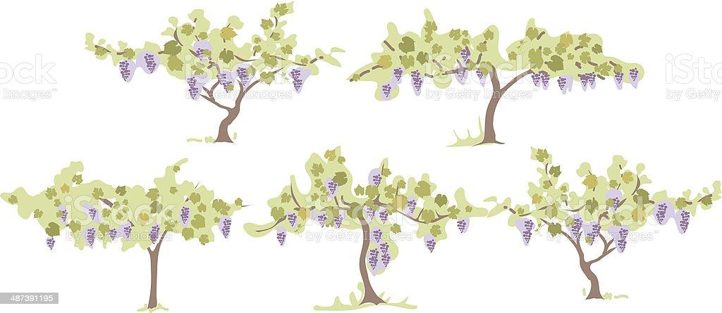Grapevines vector art illustration