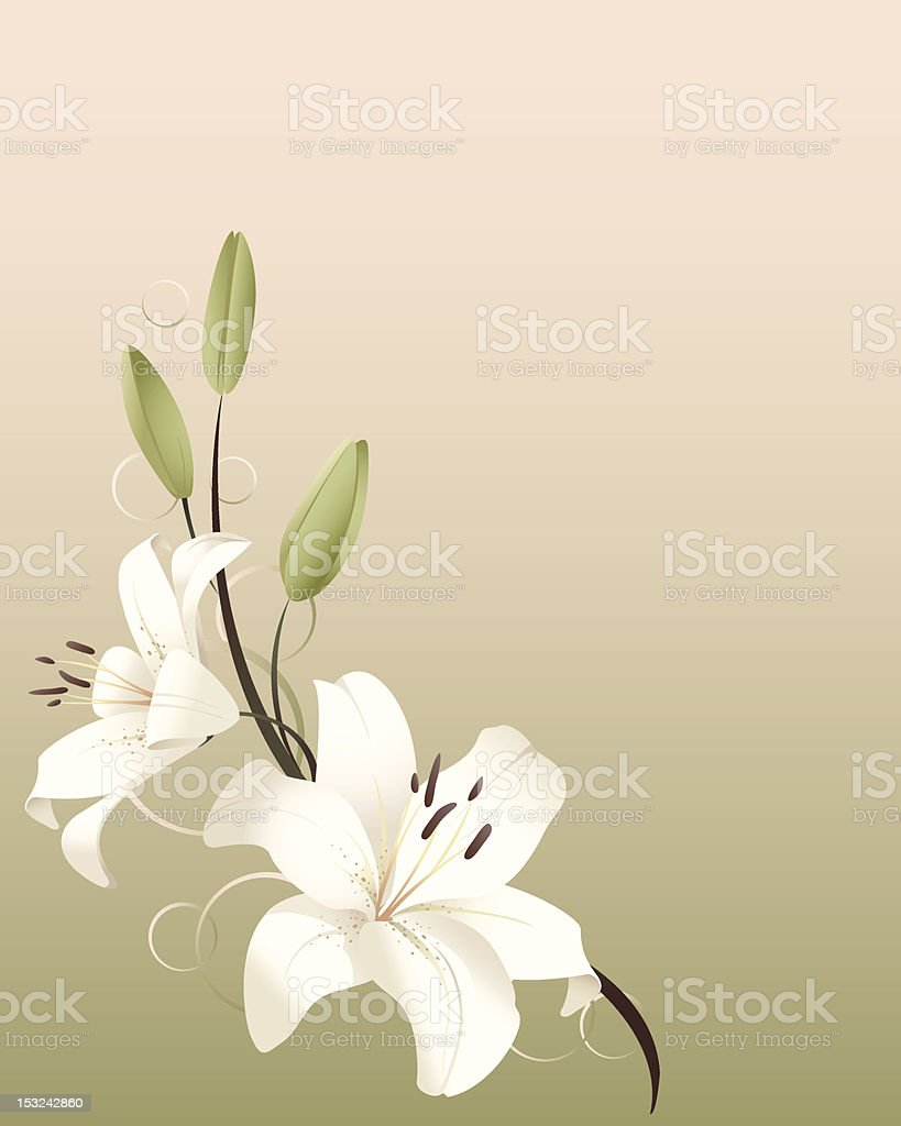 Graphic art of white spring lilies on pastel background vector art illustration