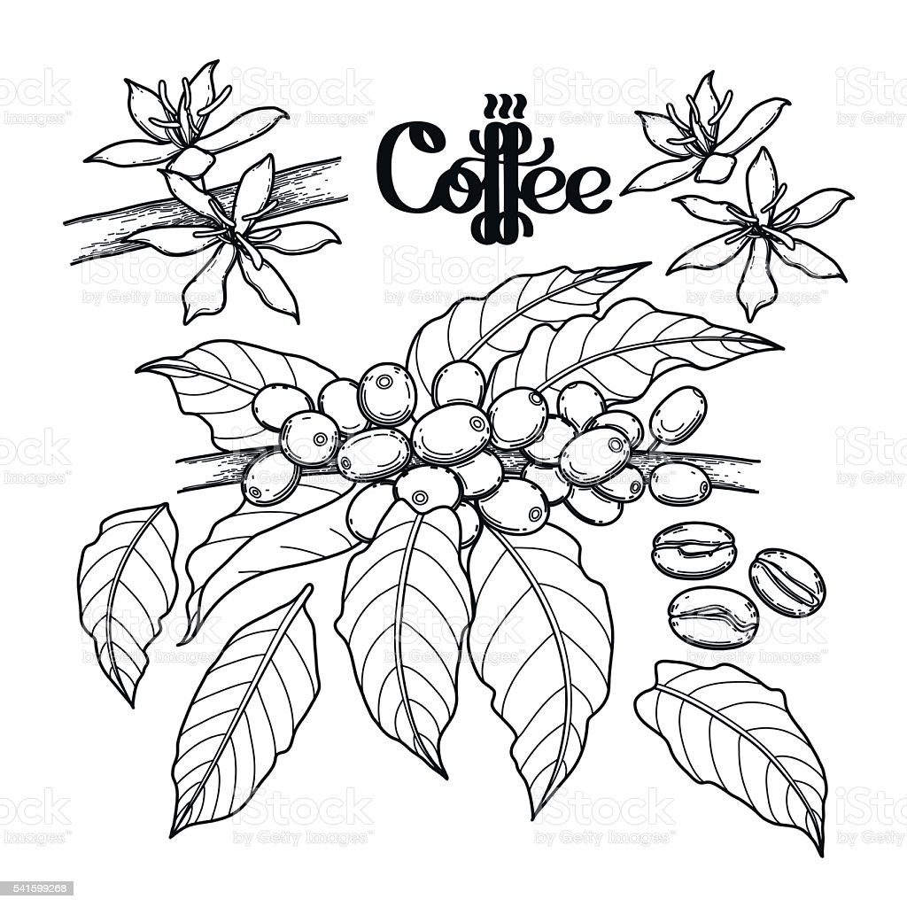 Graphic coffee collection vector art illustration