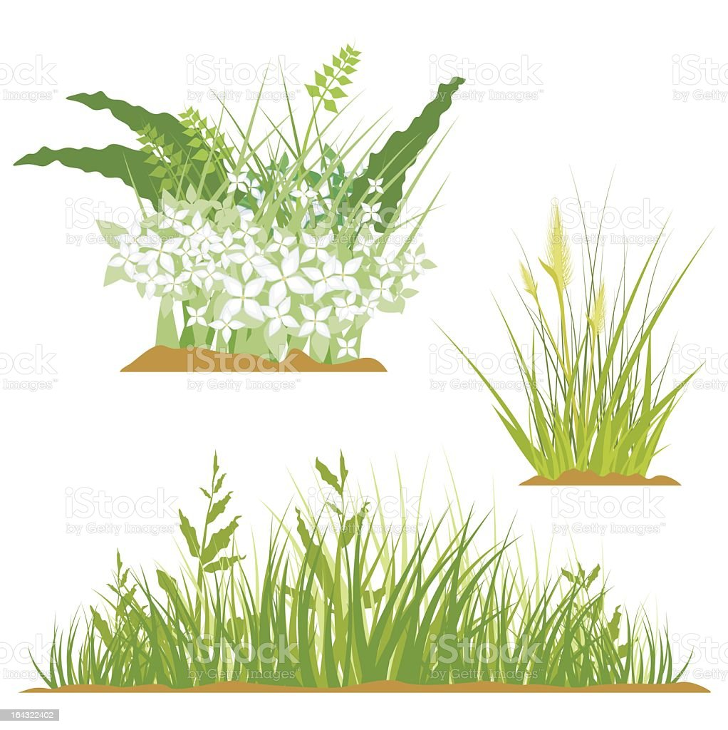 Graphic image of flowers and grass on a white background vector art illustration