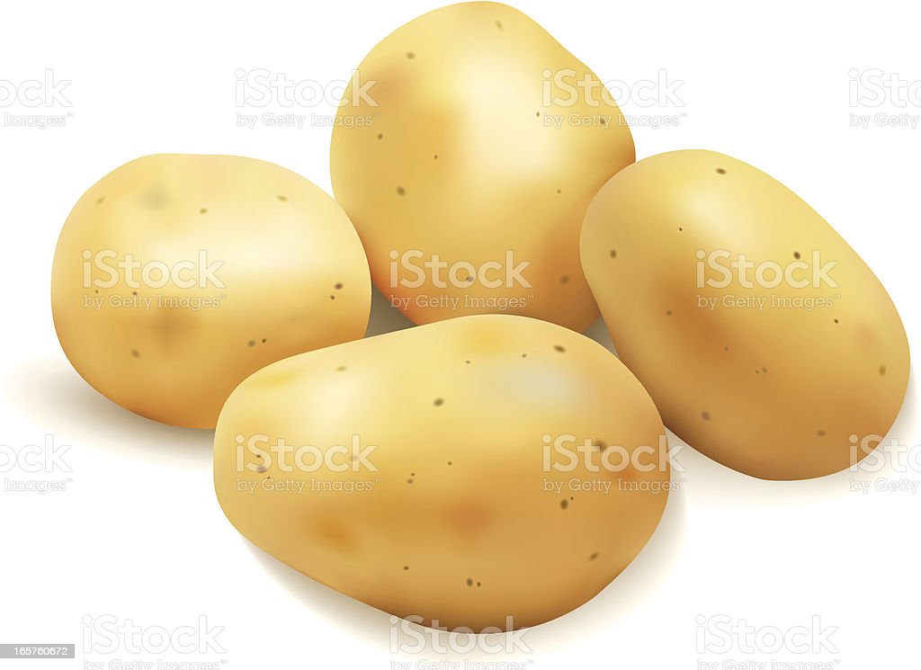 Graphic image of four potatoes on white background vector art illustration