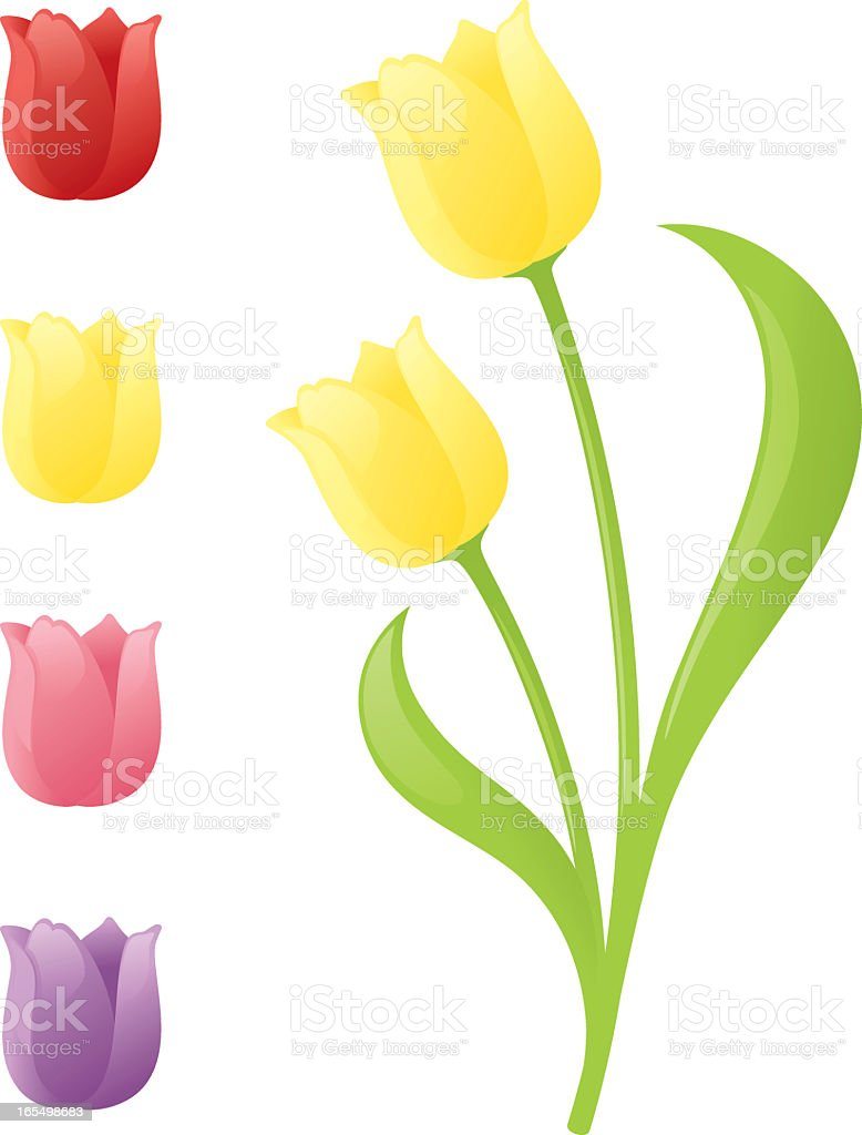 A graphic of different colored tulips on a white background vector art illustration