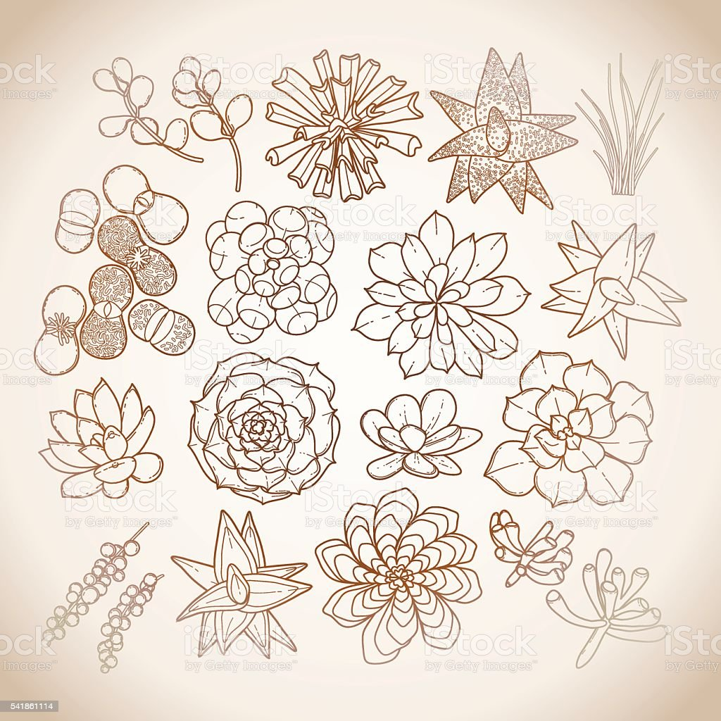 Graphic succulent collection vector art illustration
