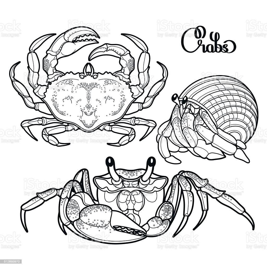 Graphic vector crab collection vector art illustration
