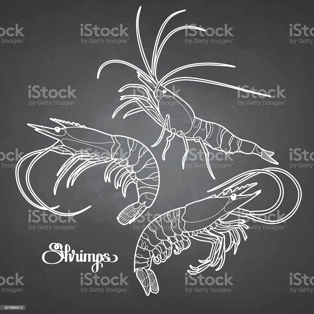 Graphic vector shrimps collection vector art illustration