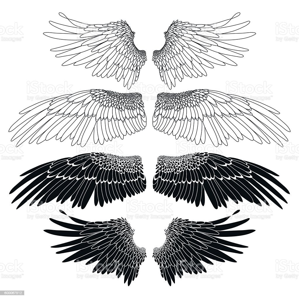 Graphic wings collection vector art illustration