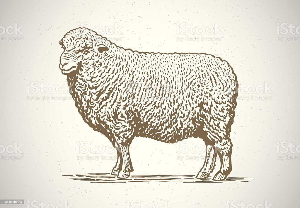 Graphical sheep. vector art illustration