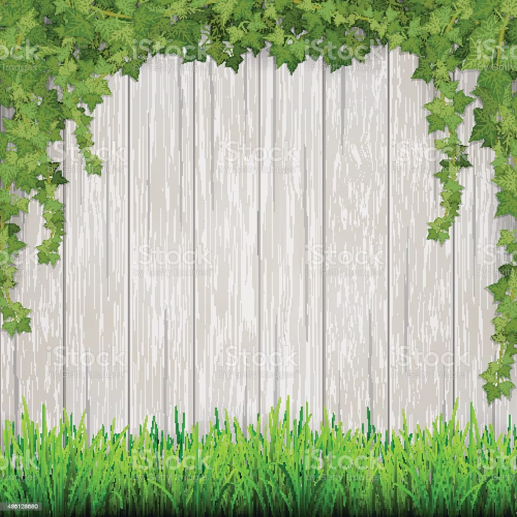 Grass and hanging ivy on white vintage wooden planks background. vector art illustration