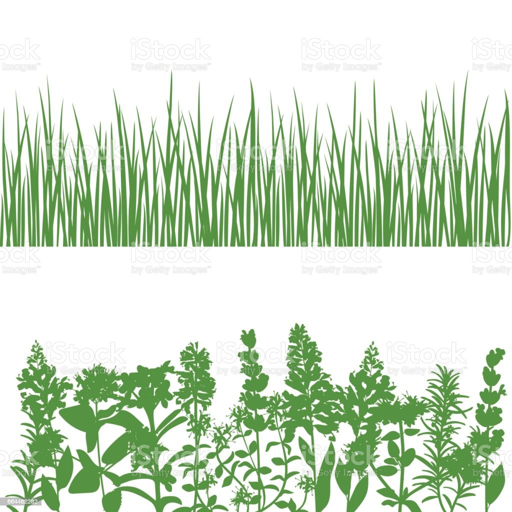 Grass and plants detailed silhouettes on white vector art illustration