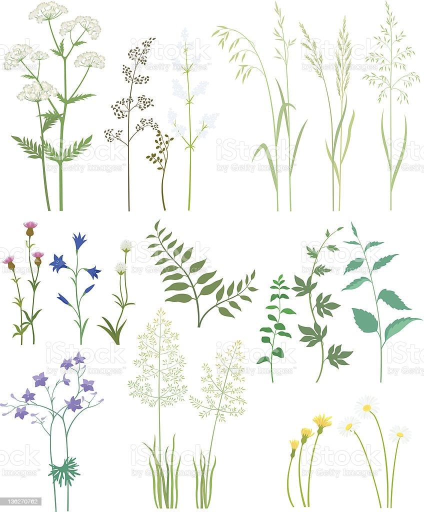 Grass and wild flowers. vector art illustration