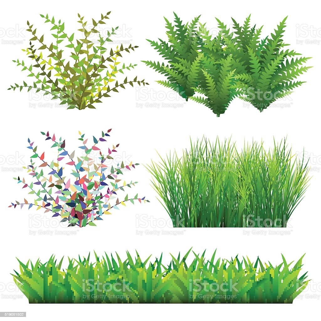 Grass And Wild Plants vector art illustration