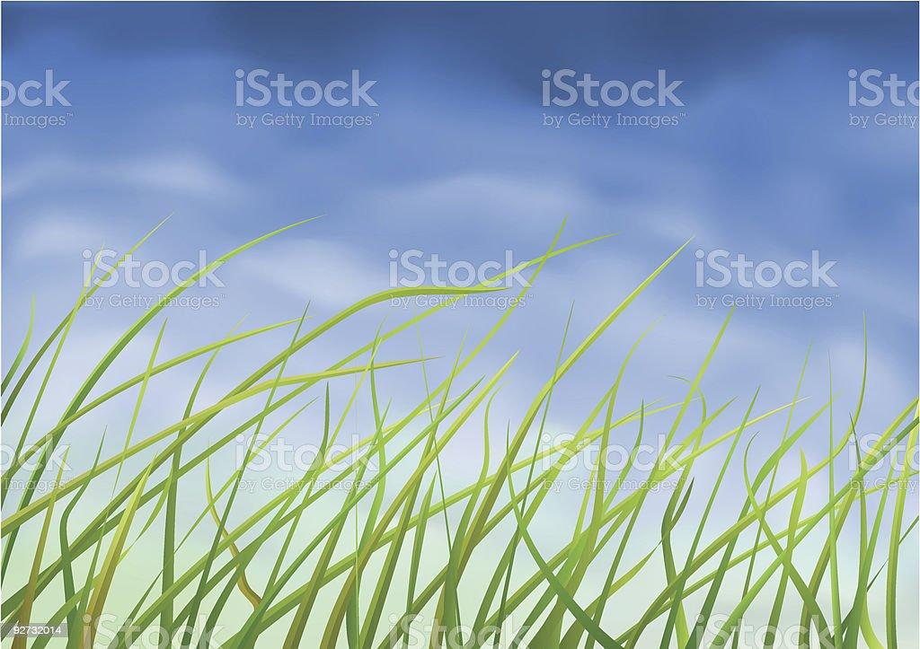 Grass close-up royalty-free stock vector art