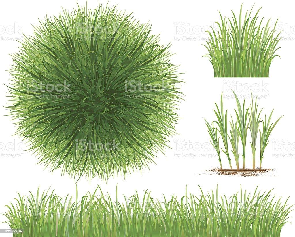 Grass Collection vector art illustration