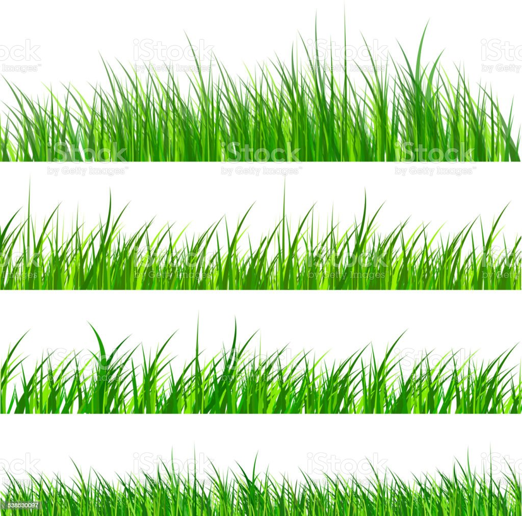 Grass isolated vector art illustration