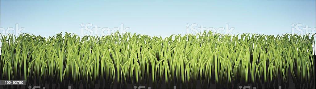 'Grass' royalty-free stock vector art