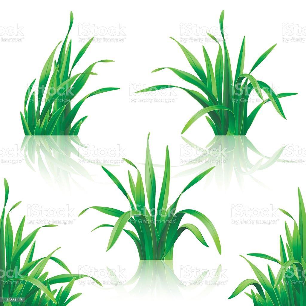 Grass. vector art illustration