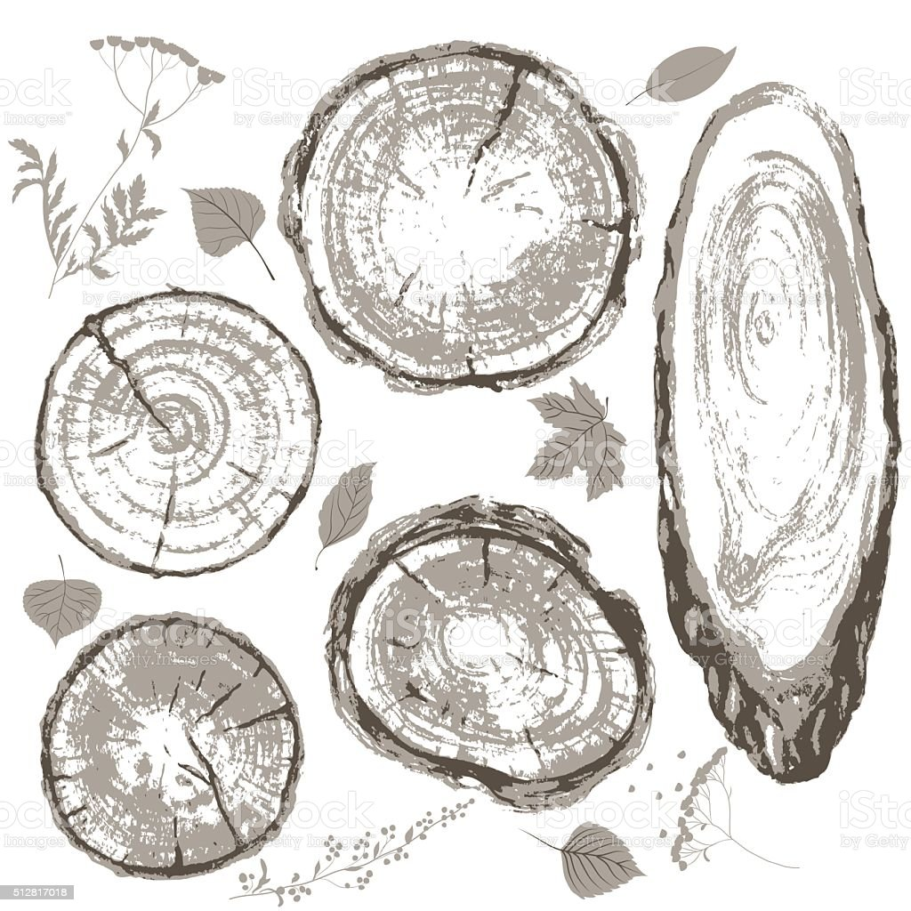 Gray cross section of tree trunk and leaves set. vector art illustration