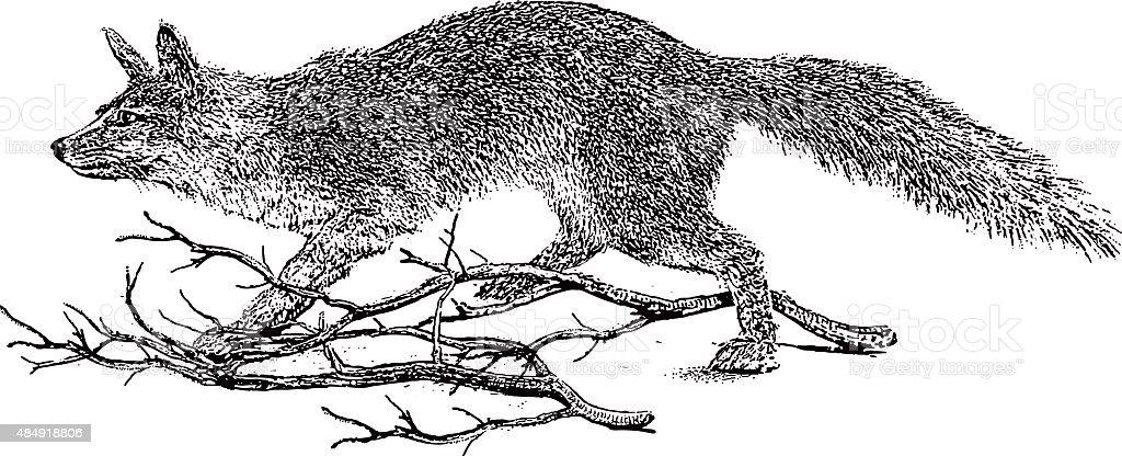 Gray Fox Hunting. Isolated On White vector art illustration