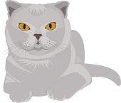 gray scottish-fold cat. Illustration