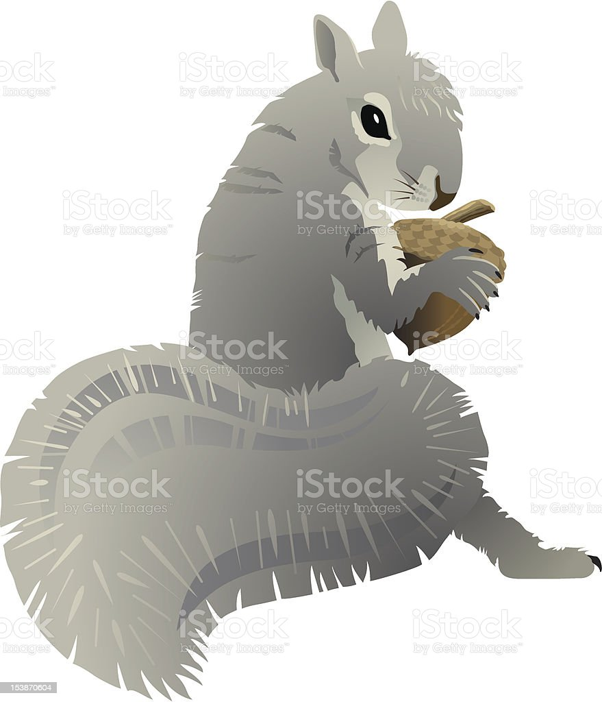 Gray Squirrel royalty-free stock vector art