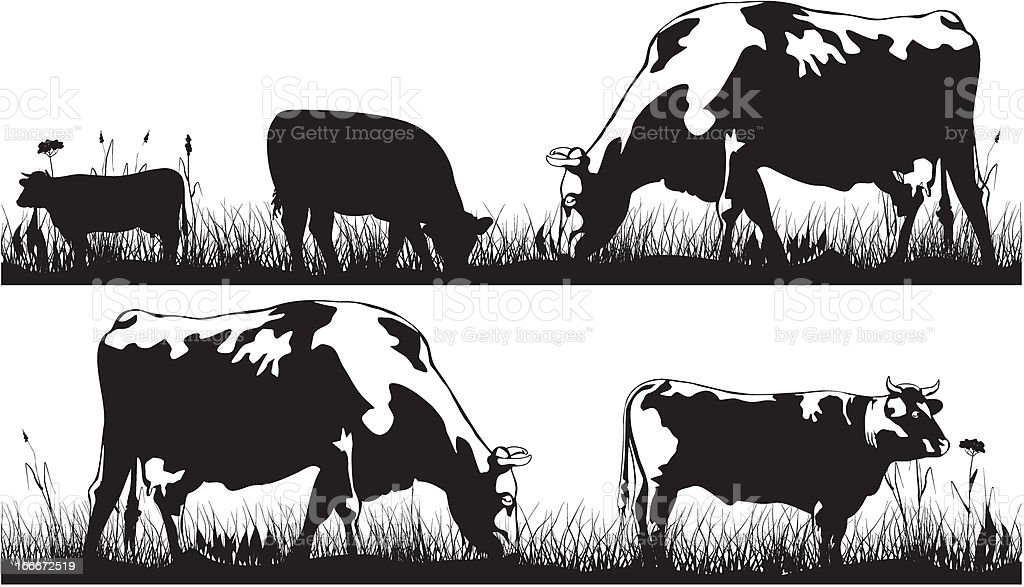 grazing cattle - cow and bull royalty-free stock vector art