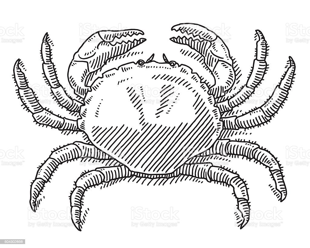 Great Crab Sea Animal Drawing vector art illustration