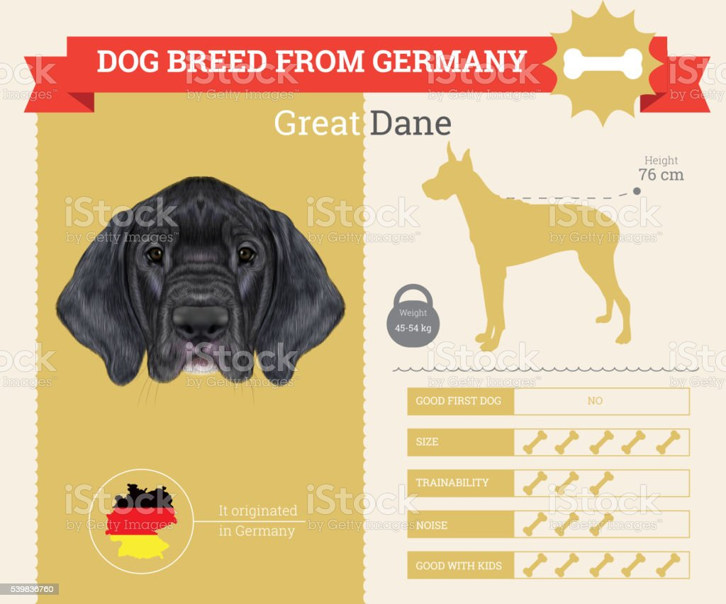 Great Dane Dog breed vector infographics. vector art illustration