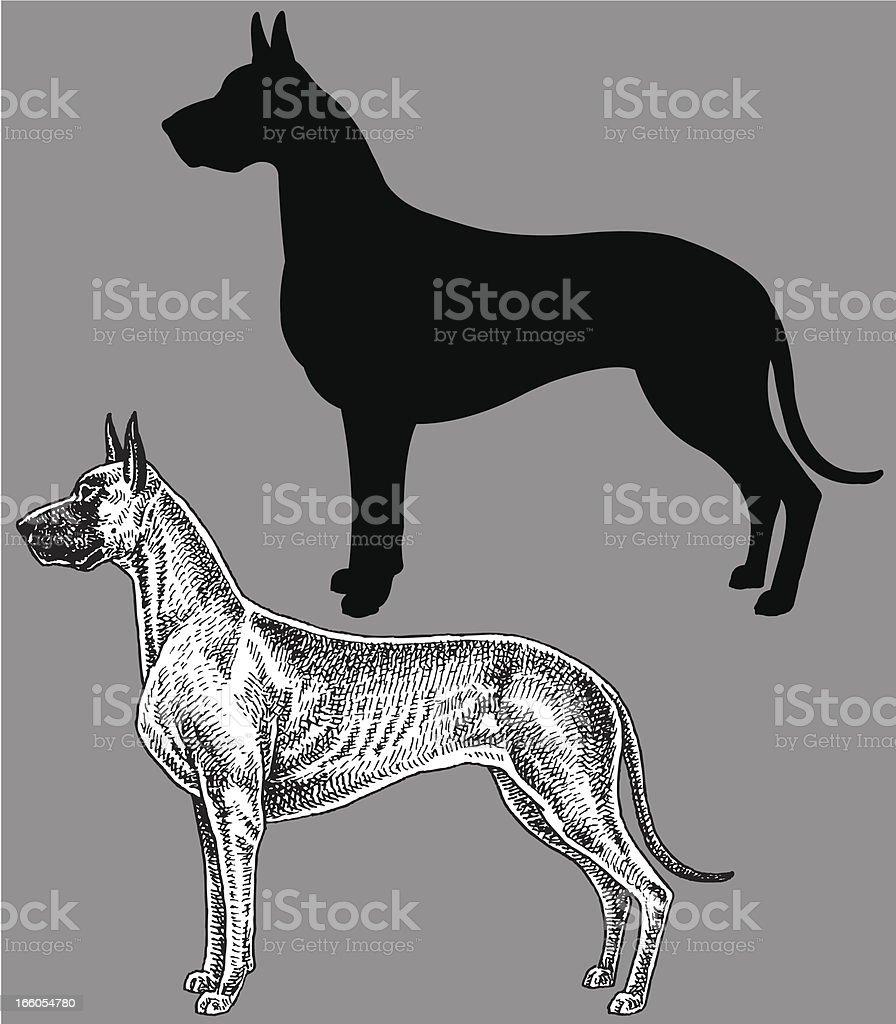 Great Dane - Dog, domestic pet royalty-free stock vector art