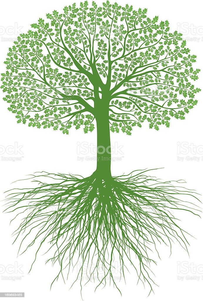 Great Oak Roots royalty-free stock vector art