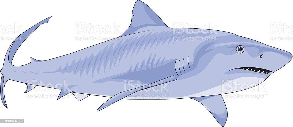 Great White Shark royalty-free stock vector art