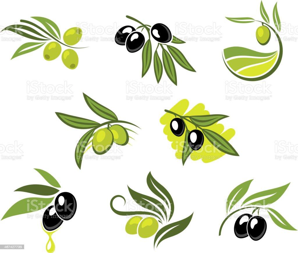 Green and black olives set vector art illustration