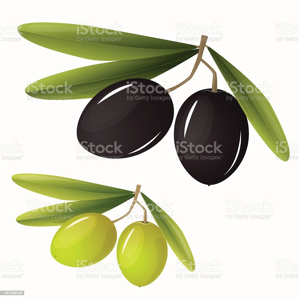 Green and black olives with leaves vector art illustration