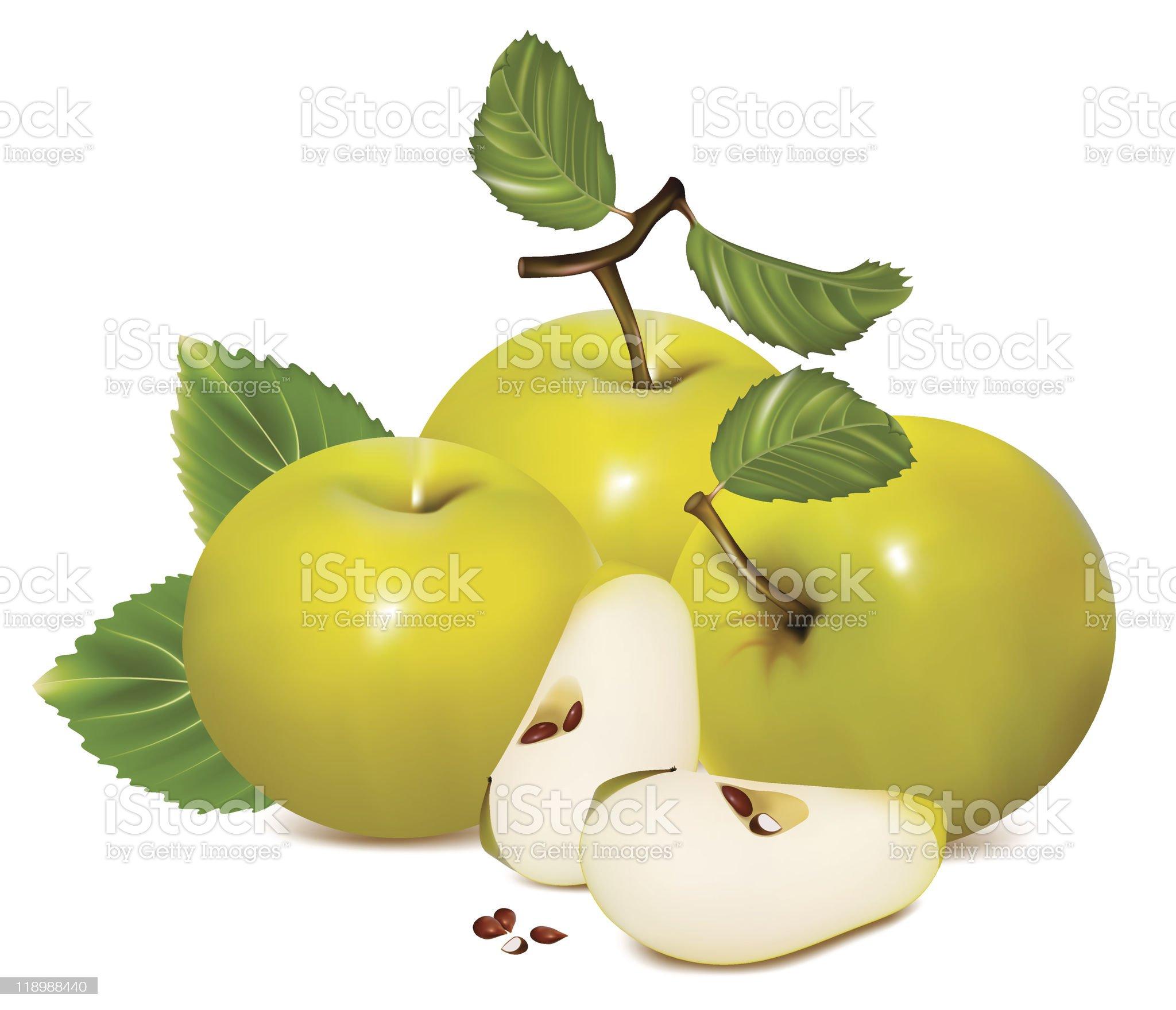 Green apples. royalty-free stock vector art