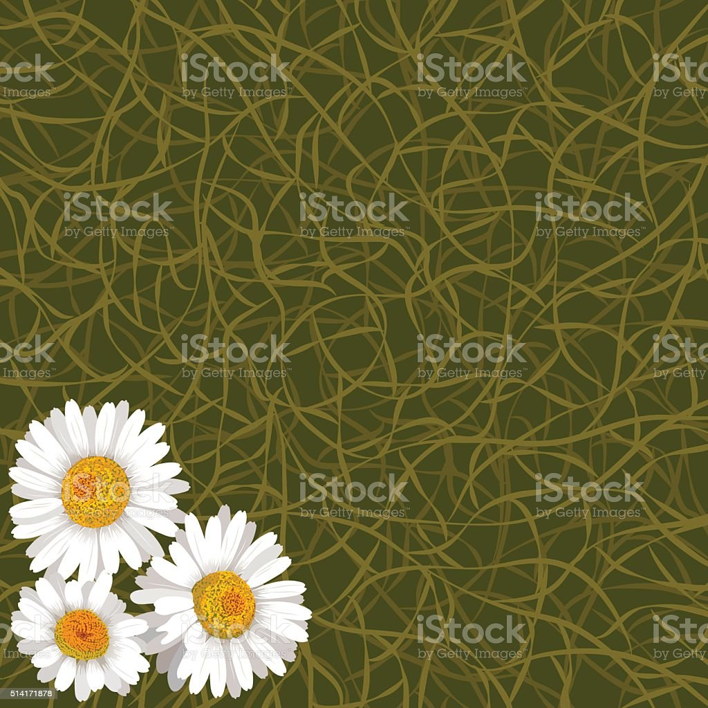 Green background from grass and flowers of camomile in corner vector art illustration
