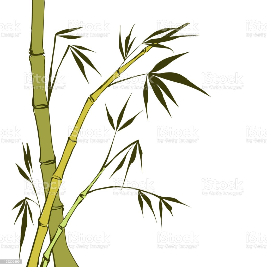 Green Bamboo stems royalty-free stock vector art