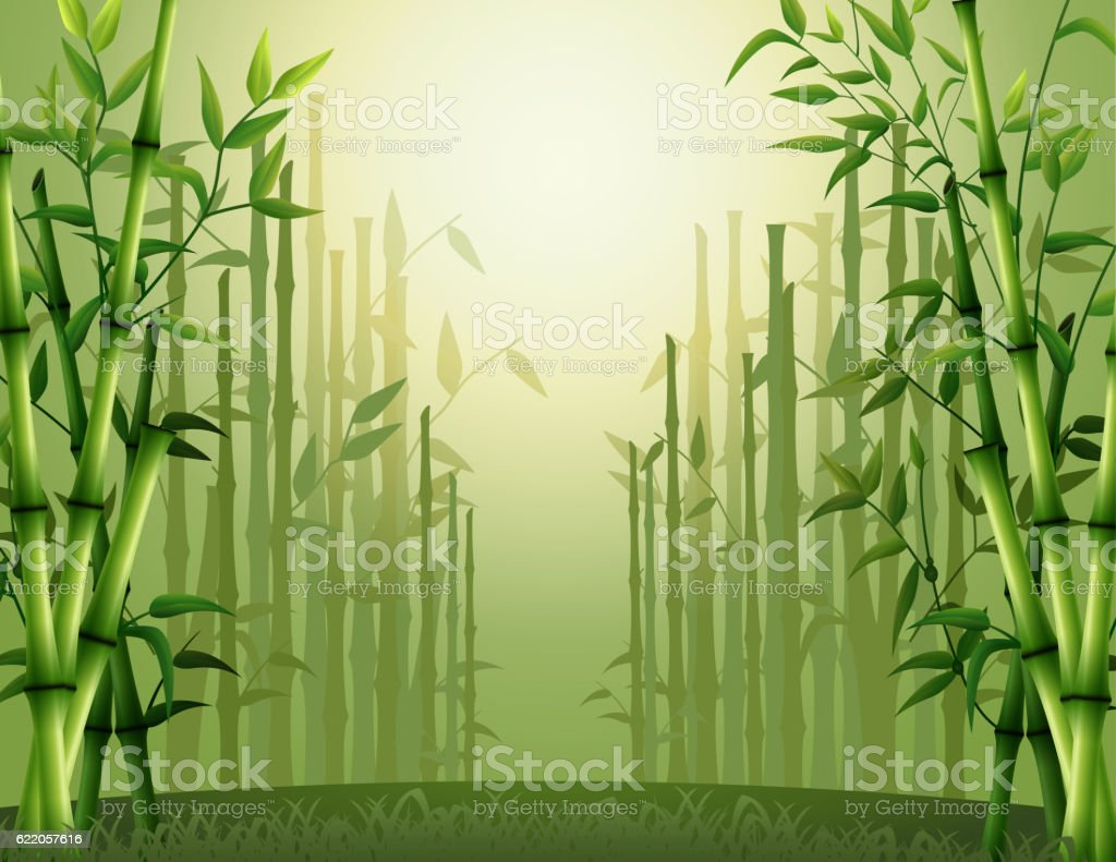 Green bamboo trees background inside the forest vector art illustration