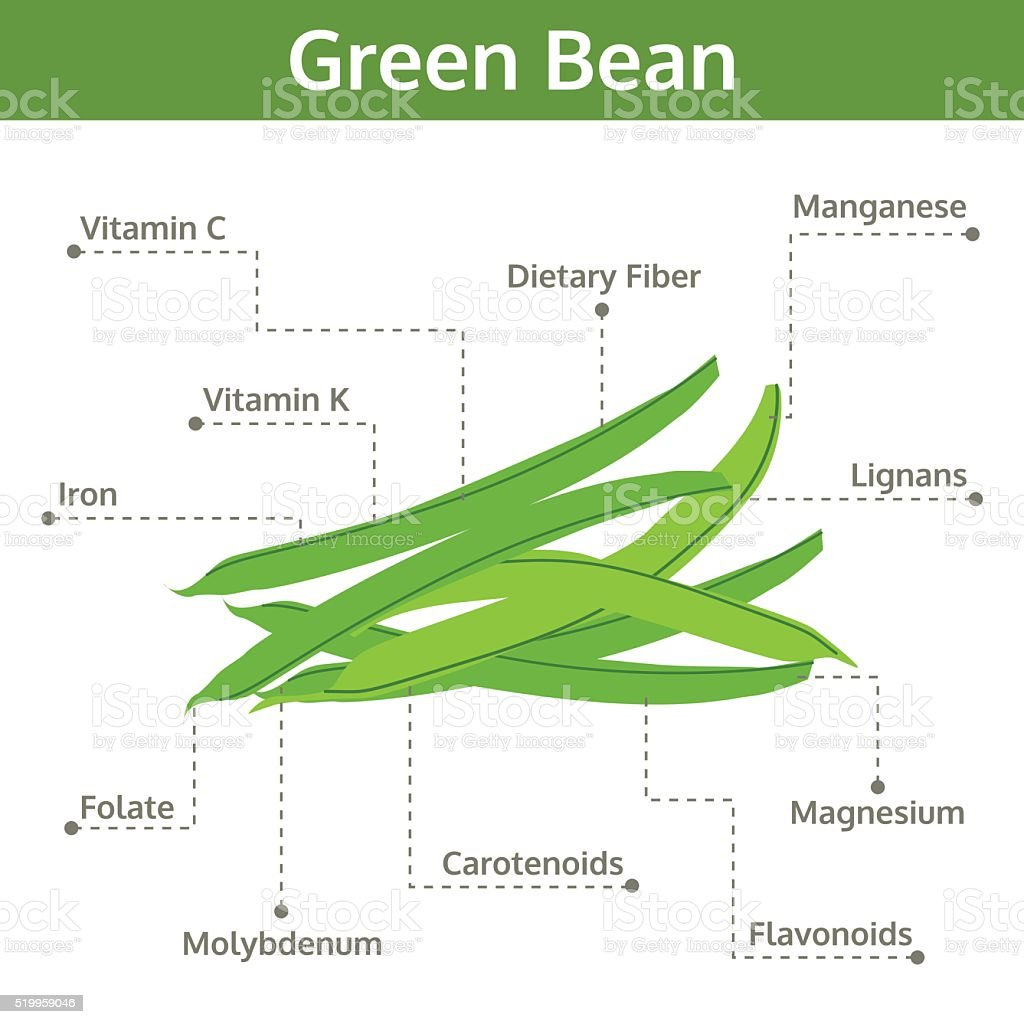 green bean nutrient of facts and health benefits, info graphic vector art illustration