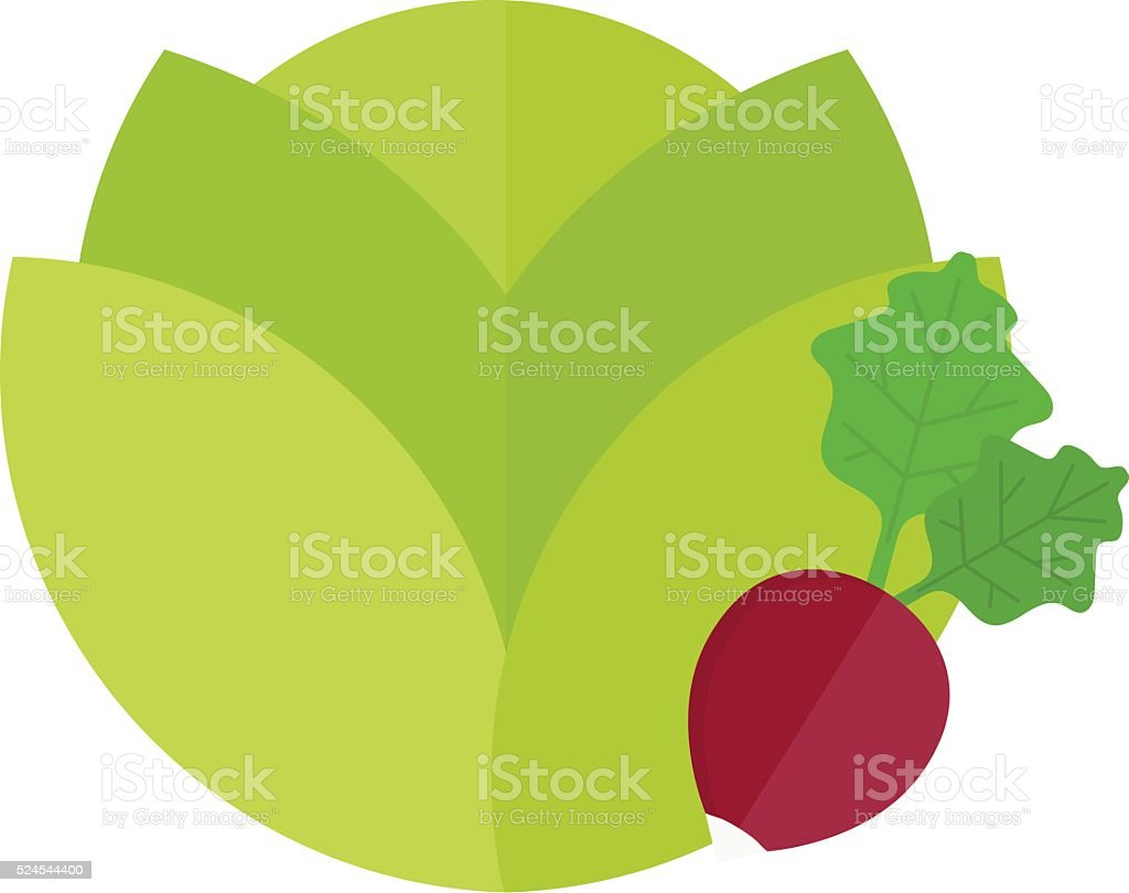 Green cabbage and red radish vegetable vegetarian fresh salad food vector art illustration