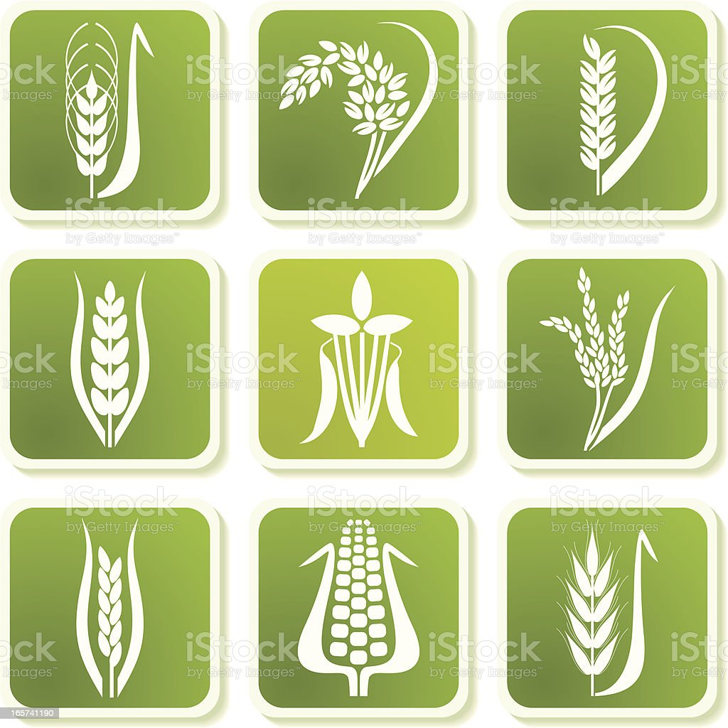 Green cereal icons vector art illustration