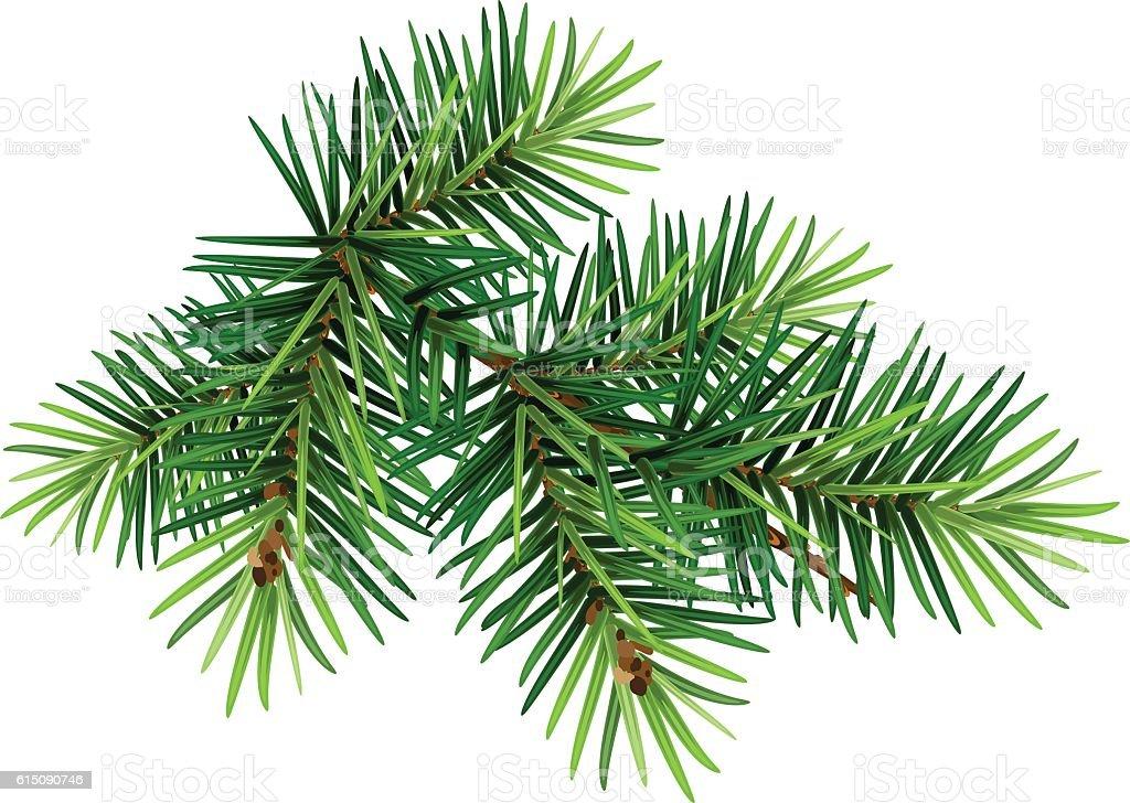 Green Christmas pine tree branch vector art illustration