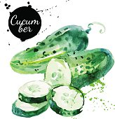 Green cucumber. Hand drawn watercolor painting on white backgrou