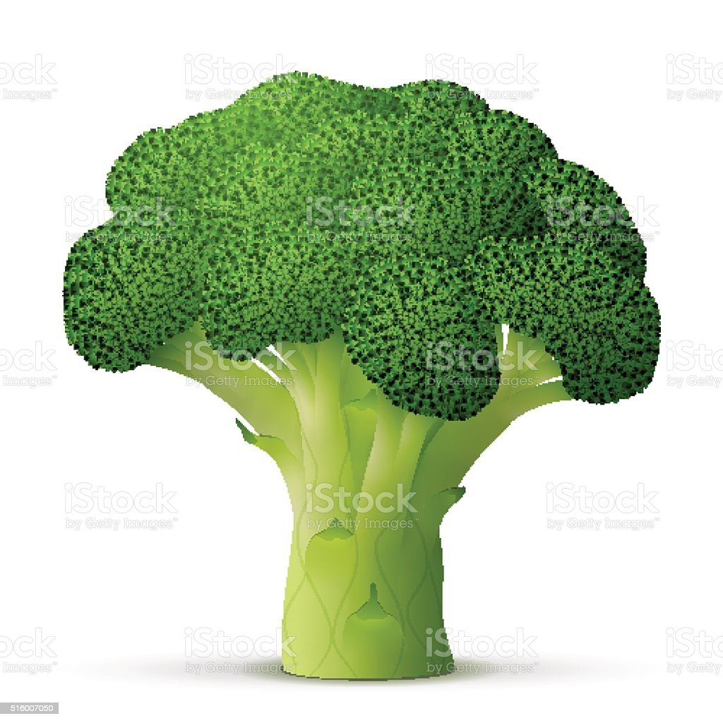 Green flower head of broccoli close up vector art illustration