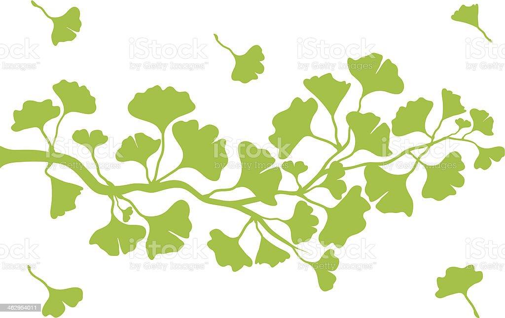 green ginkgo tree, vector vector art illustration