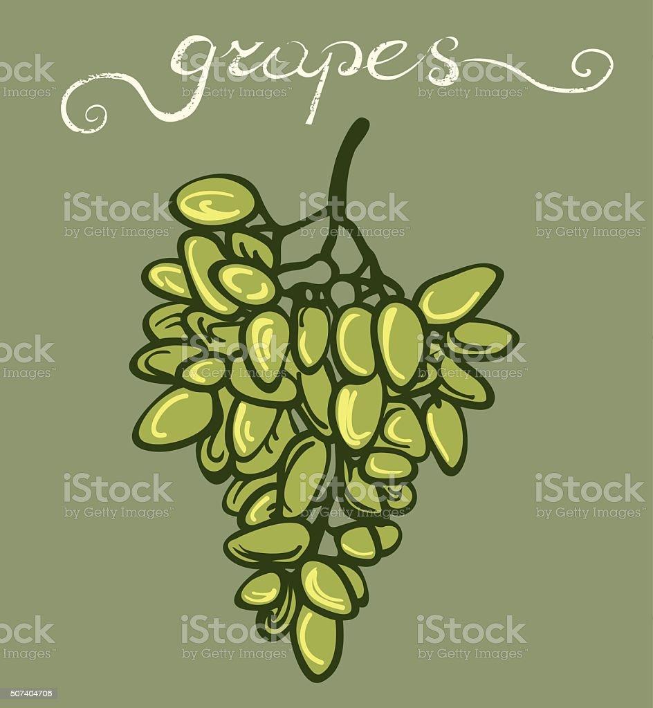 Green Grapes Bunch vector art illustration