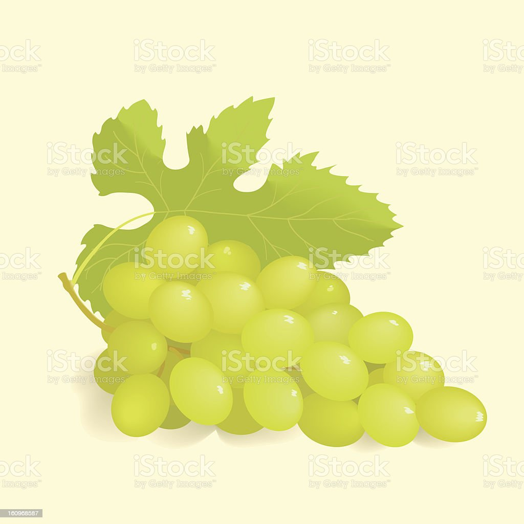 Green Grapes vector art illustration