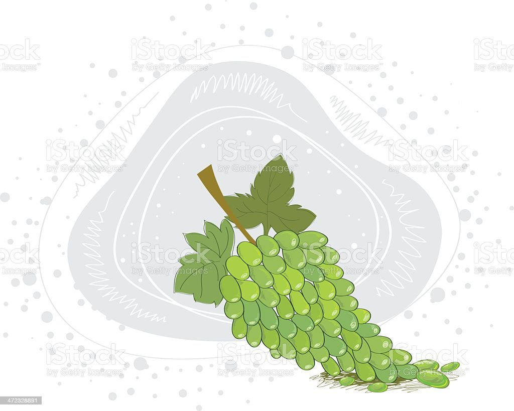 Green Grapes royalty-free stock vector art
