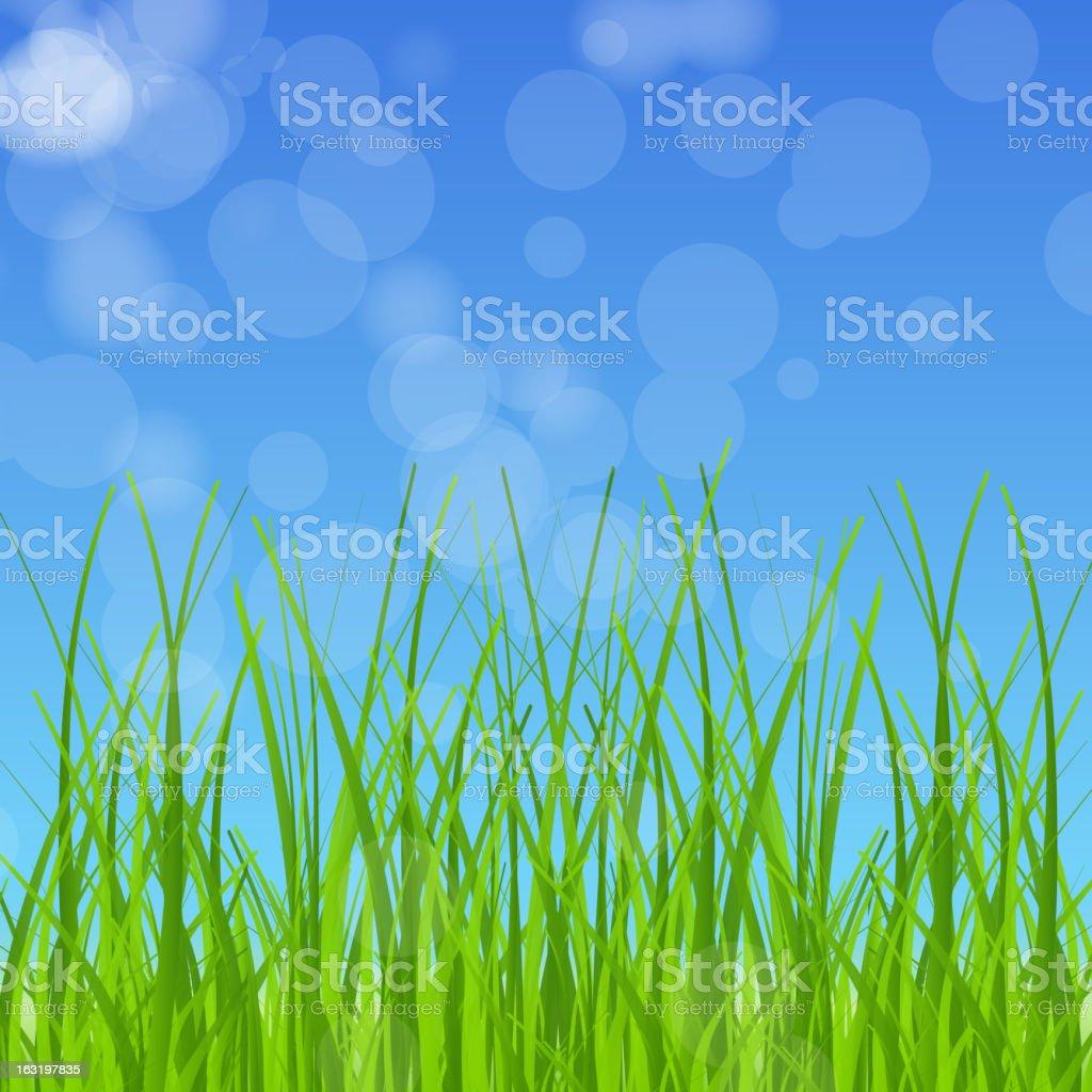 Green grass against the blue sky. vector illustration royalty-free stock vector art